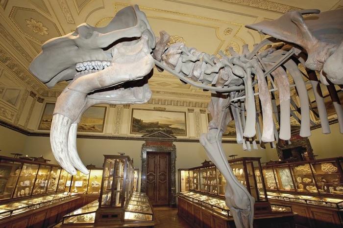 Museo de Viena de Historia Natural