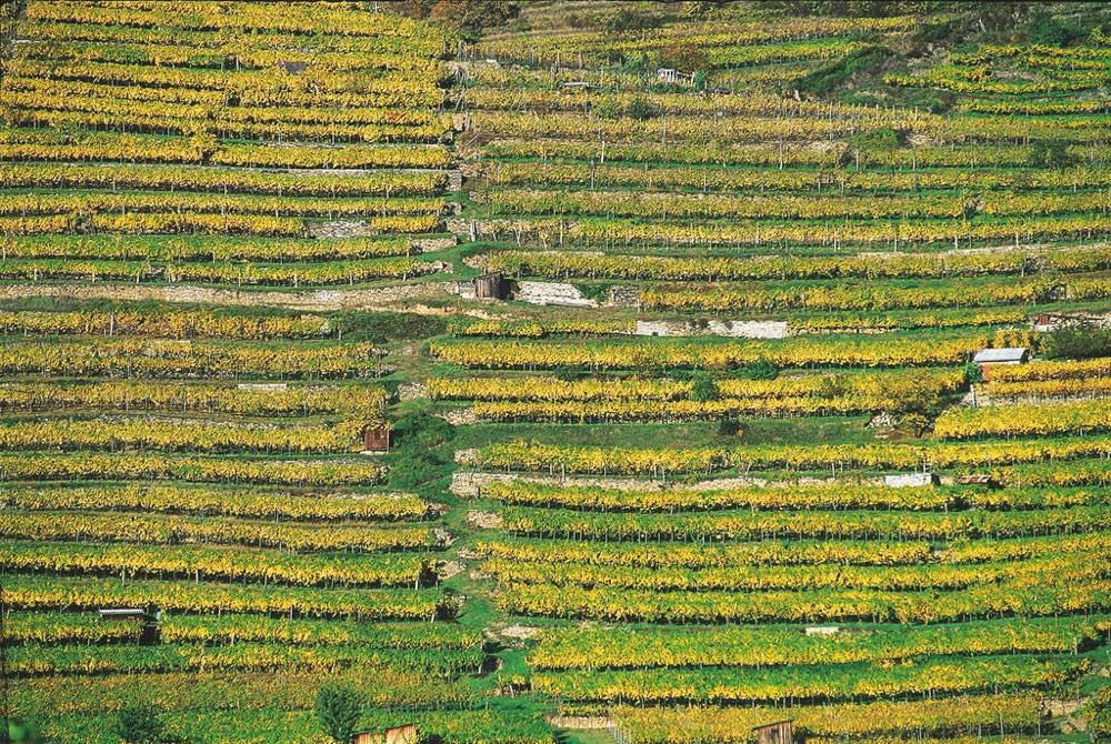 Los viñedos de la región de Duernstein